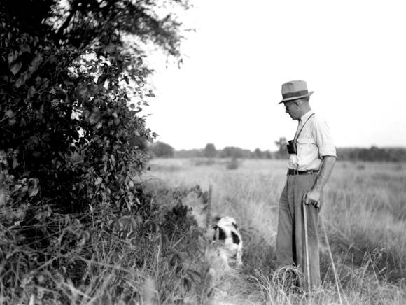 Aldo Leopold examining the forest edge