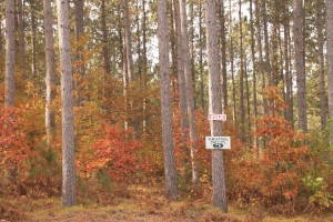 A residential lot for sale on former paper company land in Oneida County, Wisconsin
