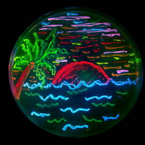 "A beach scene, made by bacteria expressing eight different colors of fluorescent proteins. Image: ""FPBeach."" Source: <a href=""https://en.wikipedia.org/wiki/BioArt#/media/File:FPbeachTsien.jpg"">Wikipedia</a>. CC BY-SA 3.0"