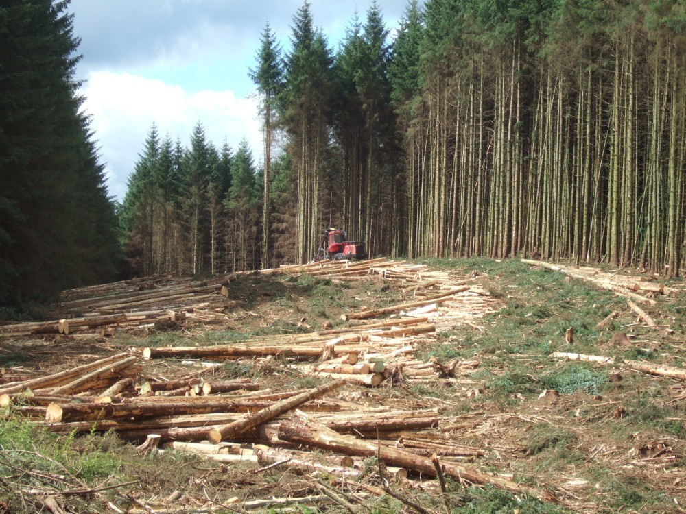 """Timber Harvesting in Kielder,"" by The Boy that time forgot, Wikipedia, CC BY-SA 3.0."