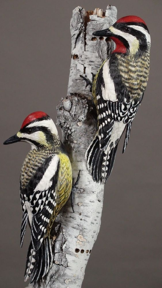 Yellow-bellied sapsuckers on basswood that was textured and painted to resemble a dead white birch tree. Photo by Shana Ederer; copyright Alan J. Bennett 2016.