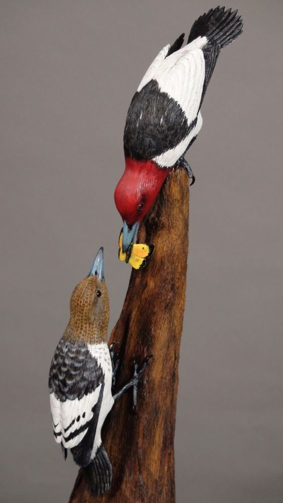 "An adult <a href=""https://www.allaboutbirds.org/guide/Red-headed_Woodpecker/id""target=""_blank"">Red-headed Woodpecker</a> with food creeps upside-down towards a hungry fledgling. The adult bird must take this acrobatic approach because the young Red-headed Woodpecker has limited maneuvering skills; it must cling to the trunk, and wait. Photo by Shana Ederer; copyright Alan J. Bennett, 2016."