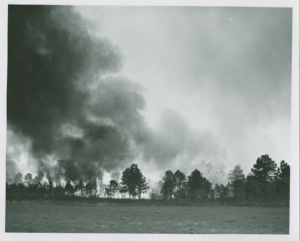 Forest fires both killed off agricultural pests and regenerated the longleaf pine ecosystem. Columbus County: Forest Fires, North Carolina County Photographic Collection, Wilson Library, University of North Carolina at Chapel Hill.