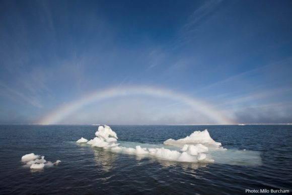 Arctic_Milo_Burcham_w_name