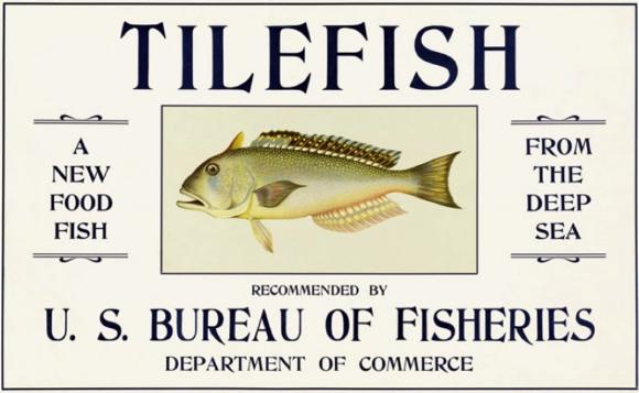 tilefish1