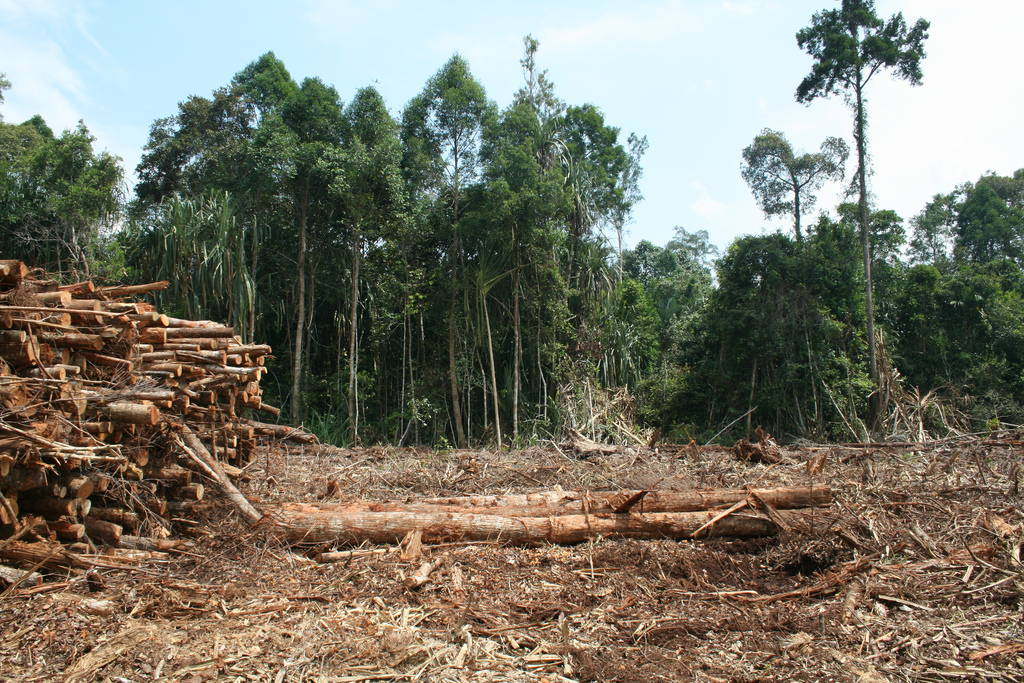 "An example of the devastation of Indonesia's rainforest that occurs when trees are harvested for export, July 2009. Image by Rainforest Action Network via <a href=""https://www.flickr.com/photos/rainforestactionnetwork/5680744399#"" target=""_blank"">Flickr</a>."