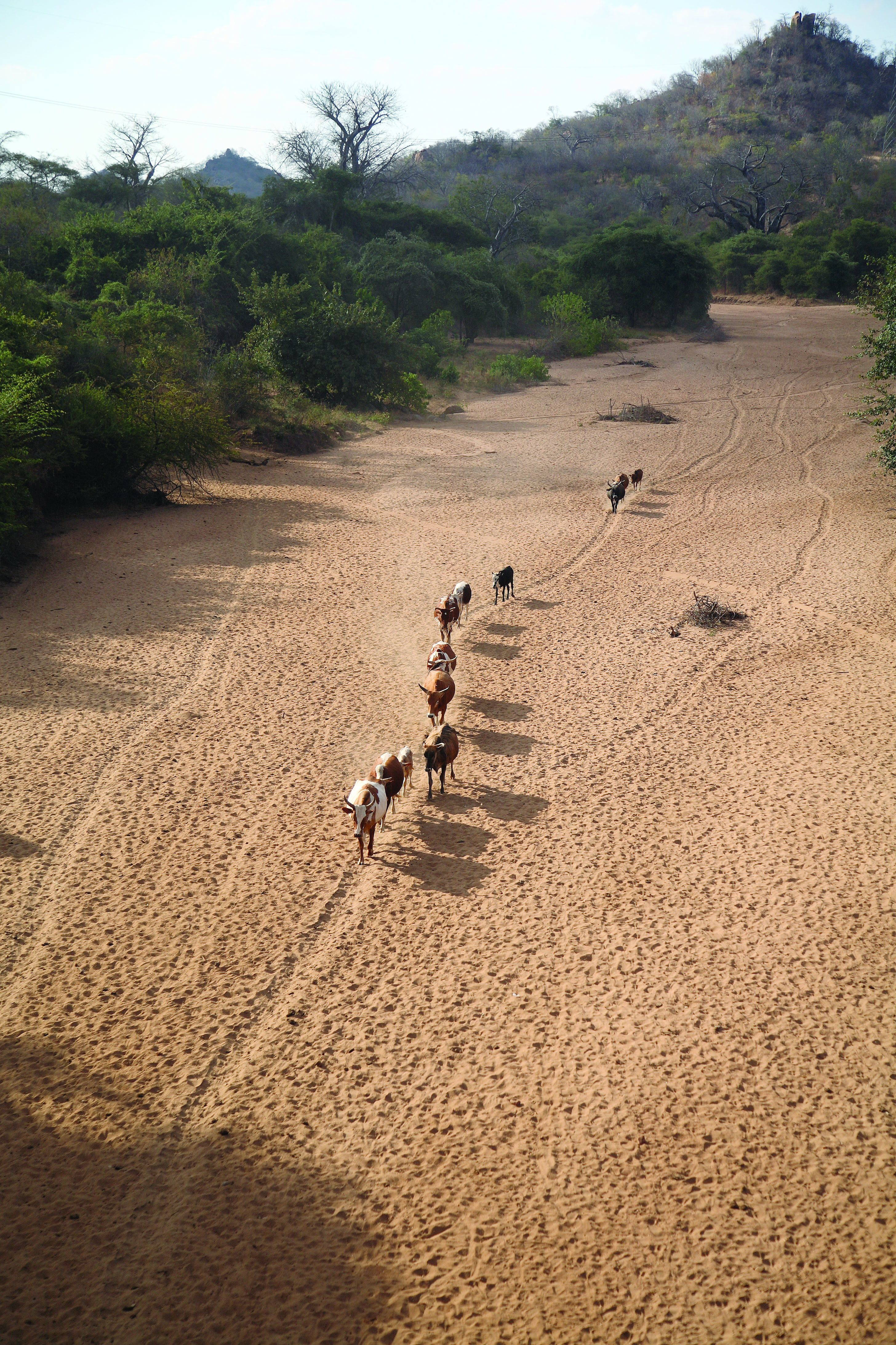 Dry river bed, Mozambique, 2008. Source: Wikimedia Commons.