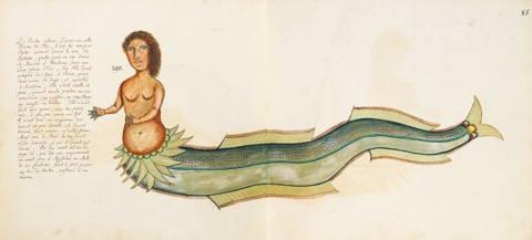 Samuel Fallour's Sirenne from Ambon, 1718.