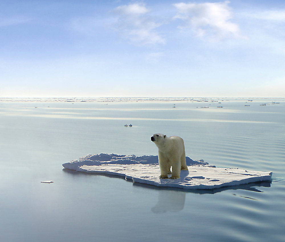 "In a popular image of ""decline"" and ""loss,"" an endangered polar bear floats on a diminishing ice floe in the Arctic sea. Photograph by Gerard Van der Leun."