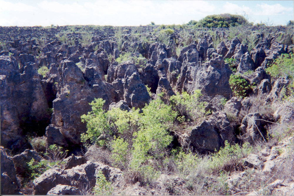 A rocky landscape played out by phosphate mining supports only a few grasses and shrubs