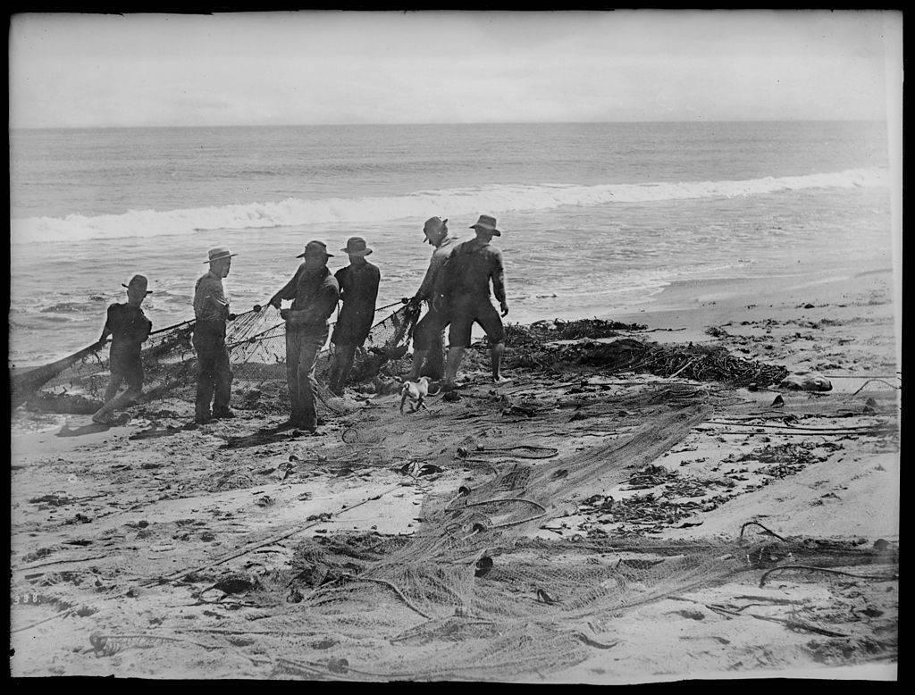 Fishermen drawing nets on the Santa Monica Beach c. 1900. Image from Wikimedia Commons.