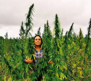 Winona LaDuke stands in a field behind three tall stalks of hemp that reach two feet above her head against a cloudy sky,